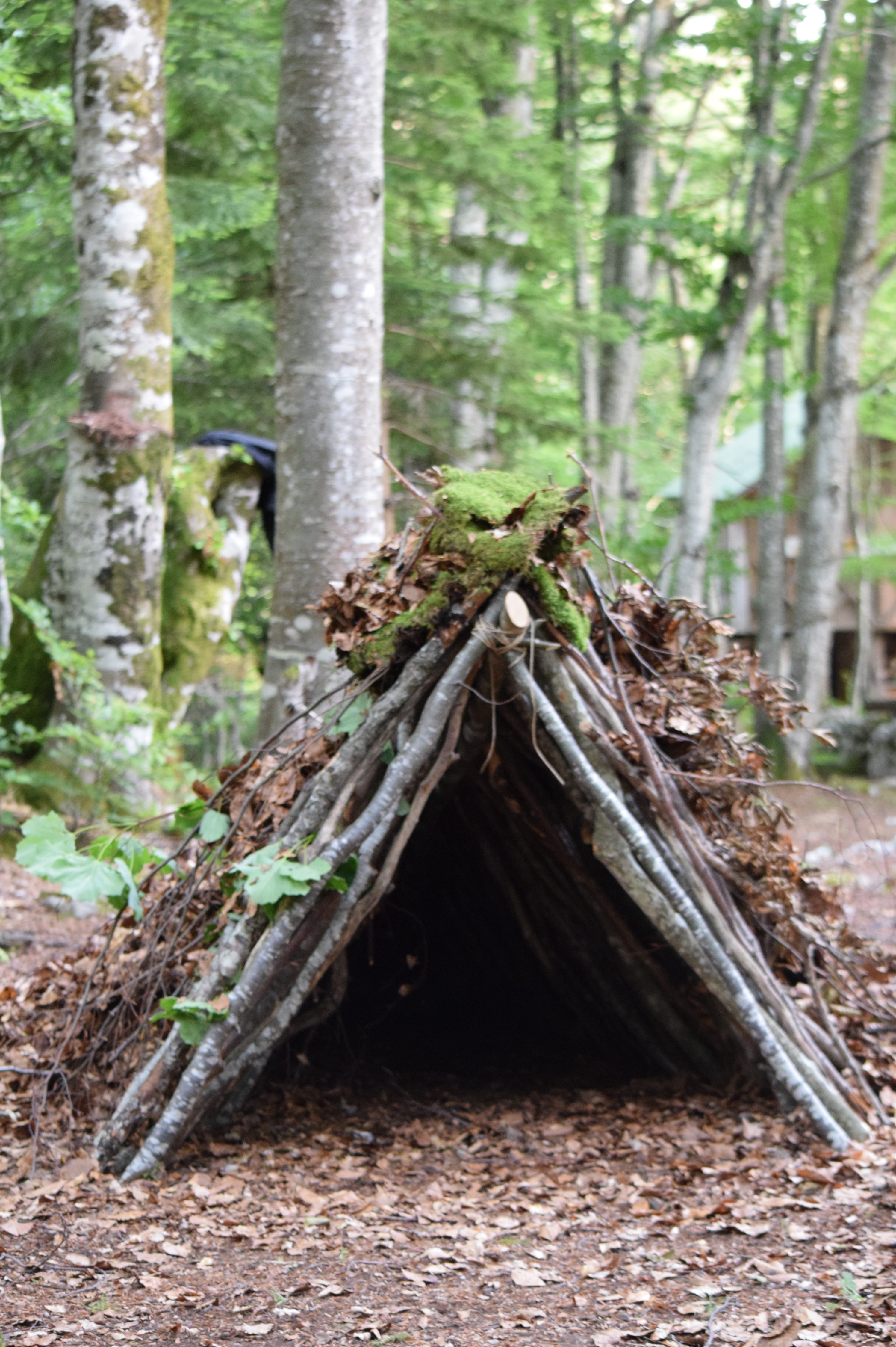 INTO THE BEAR FOREST…part 4 | Kuterevo Volunteers' Blog